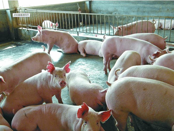 厌氧沼气工程——某国内龙头养殖企业